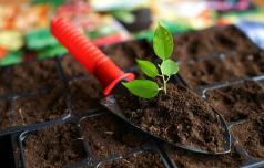 Čas je za presajanje rastlin
