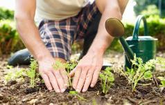 Spomladanska dela na zelenjavnem in okrasnem vrtu