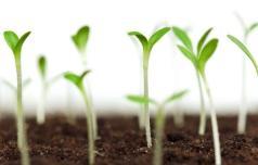 O semenih, setvi in kaljenju