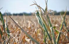 Prijava škode zaradi suše do 1. septembra