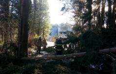Zaradi vetroloma velika škoda v gozdovih