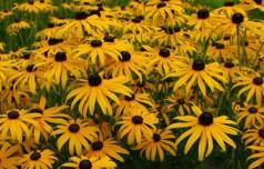 Katere rastline ne sodijo v naše okolje?