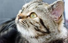 Mačke ne preganjajo le miši, tudi stres