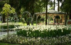 Prazniki med cvetočimi tulipani