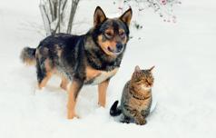 Zaščitimo živali pred mrazom in pokanjem