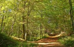 Podlubniki še ogrožajo gozdove