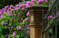 Cvetoči grmički za lepšo okolico doma
