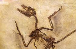 Dinozavri so imeli prhljaj