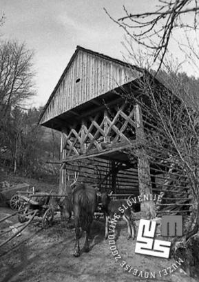 Kozolec je tipična arhitekturna posebnost slovenskega podeželja. Na sliki kozolec na Hotavljah, maj 1971. Foto: Edi Šelhaus, hrani arhiv Novejšega muzeja Slovenije.