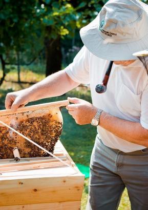 Trendi na področju turizma so naklonjeni tudi čebelarstvu. Foto: arhiv ČZS
