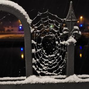 Snežinke, ki so okrasile pajkovo mrežo Foto: Romana Pustavrh