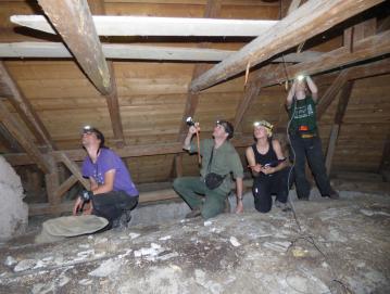 Člani skupine za netopirje pod vodstvom mentorja Primoža Presetnika (drugi z leve) pri štetju in ugotavljanju vrst netopirjev na podstrešju cerkve sv. Urha v Leskovici