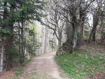 Drevesa imajo blagodejne učinke; če postojimo ob njih ali pod njimi, nas zdravijo. Foto: Jana Rojc