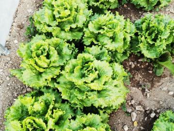 Ekološko pridelana hrana je kakovostna in koristna za naše zdravje. Foto: Lidija Razložnik