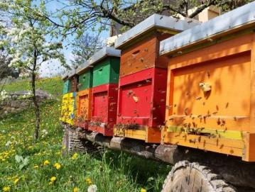 Že tretjič smo letos obeležili svetovni dan čebel. Foto: arhiv ČZS