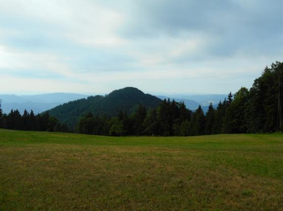 Pot Med gorami