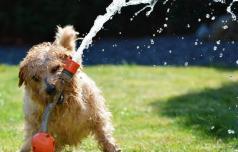 Kako v vročini poskrbeti za živali?
