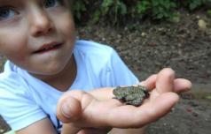 600 tisočakov za ohranitev žabic na Kozjanskem