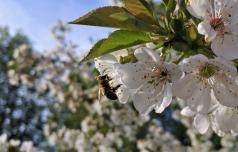 Dan čebel: letno pojemo dober kilogram medu