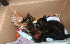 V Podčetrtku cenejša sterilizacija mačk