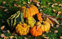 Tisočletja pozdravov jeseni