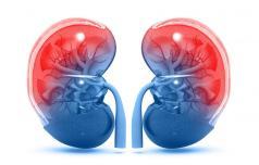 Zdravje ledvic za vse in povsod