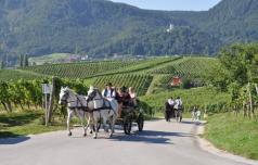 Konjiškim trgačem bo pomagala Vinska kraljica