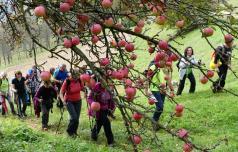 V Podsredo na Praznik kozjanskega jabolka
