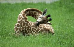 Kako spijo živali?