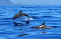 Česar niste vedeli o delfinih