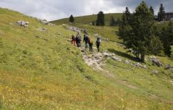V gorah letos večinoma domači planinci