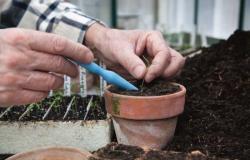 Nasveti za uspešno presajanje rastlin