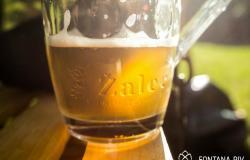 Iz Fontane piv Zeleno zlato bo spet teklo pivo