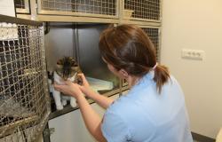 V Šentjurju nova bolnica za živali