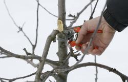 Pomladansko obrezovanje okrasnega drevja