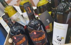 Avstrijce vabijo z vinom in kulinariko