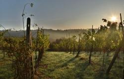 O trti, vinu in Slovencih
