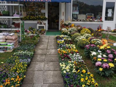 Vrata cvetličarn so bila odprta tudi na 1. november, v cvetličarni Iris v Podčetrtku so vseeno prodali za približno polovico manj kot lani. (Foto: Cvetličarna Iris)
