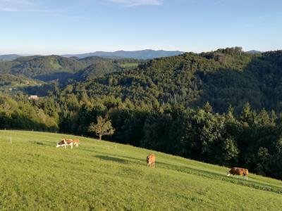 Kakšno je stanje v slovenskem kmetijstvu v teh težkih časih, ki jih zaznamuje covid-19? Preverili smo v tokratni kmetijski oddaji. (Fotografija je simbolična, foto: Štajerski val)