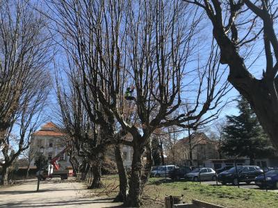 Drevesa, ki so bila leta 1994 žrtev