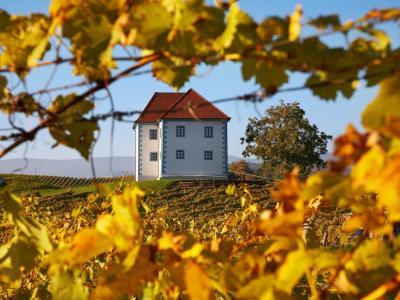 V vinogradih Zlatega griča je pod streho približno tretjina trgatev. (Foto: Zlati grič)