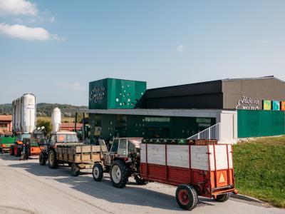 V imenski kleti bodo letos od okoliških vonogradnikov odkupili okoli 250 tom grozdja, lani so ga odkupili 300 ton. (Foto: Kmetijska zadruga Šmarje)
