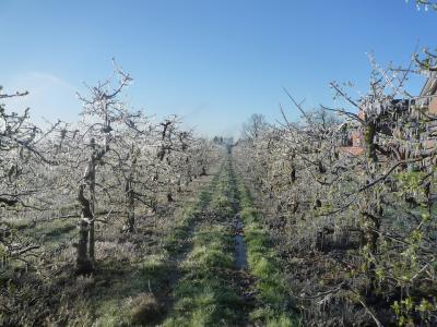 Najbolj prizadeti so koščičarji, kakšna bo škoda na nekaterih vrstah jablan se bo pokazalo v prihodnjih dneh. (Foto: Pixabay)