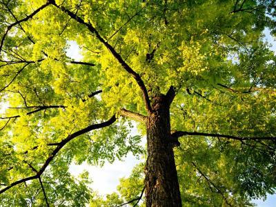 V Šentjurju bodo najmlajši pravljične junake spoznavali pod krošnjami dreves. (Foto: Pixabay)