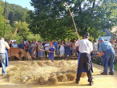 Mlačev žita bo tudi letos jedro prireditve Likof na taberhi. (Foto: Radio Štajerski val)