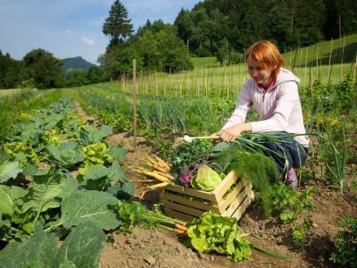 Na kmetiji Katarine Očko pridelujejo ekološko, sonaravno pridelano hrano. (Foto: FB Okusiti Laško)