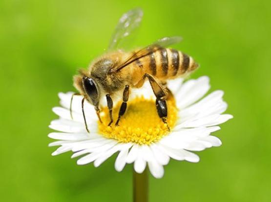 Čebelarska pot