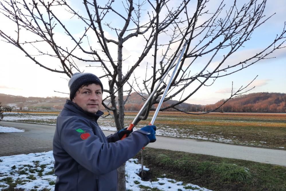 Največ napak sadjarji napravijo pri obrezovaju sadnjega drevja, ocenjuje Adrijan Črenelč. (Foto: Kozjanski park)