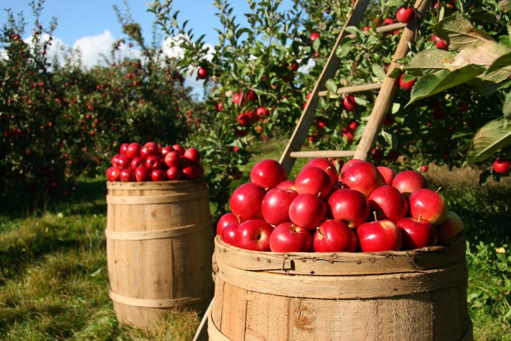 Letošnji razpis zajema tudi manjše kmetije s trajnimi nasadi. (Foto: Pixabay)